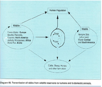Trichinella anthropozoonosis, Enterobiasis témák